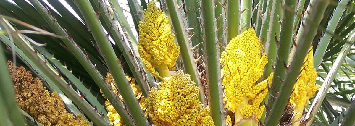 Southhaven plants